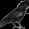 Crow Language